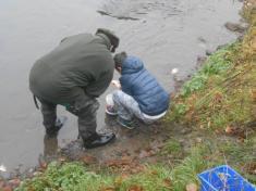 Vypouštění ryb do řeky Bíliny